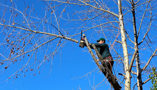 Baum-, Strauch- und Heckenschnitt